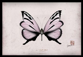 Small Blush - signed print